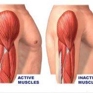 Atrophie des muscles