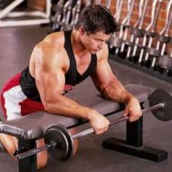 Avant bras musculation