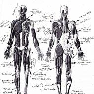 Bac de musculation