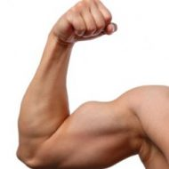 Bras musculation