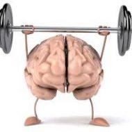 Cerveau muscle