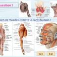 Combien de muscle dans le corps humain