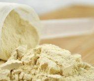 Conseil proteine musculation