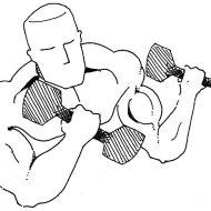 Dessin musculation