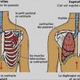 Douleur muscles intercostaux