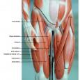 Douleurs muscles cuisses
