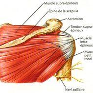 Douleurs tendons et muscles
