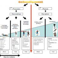 Echauffement musculation
