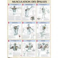 épaules musculation