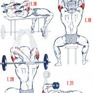 Exercice de musculation bras