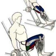 Exercice de musculation cuisse