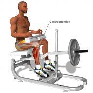 Exercice de musculation jambes