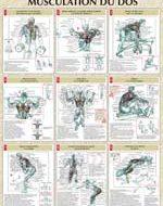 Exercice de musculation pour le dos