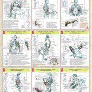 Exercice de musculation pour les bras