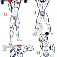 Exercice de musculation triceps
