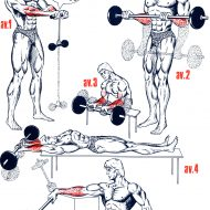 Exercice musculation des bras