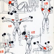 Exercice musculation epaules