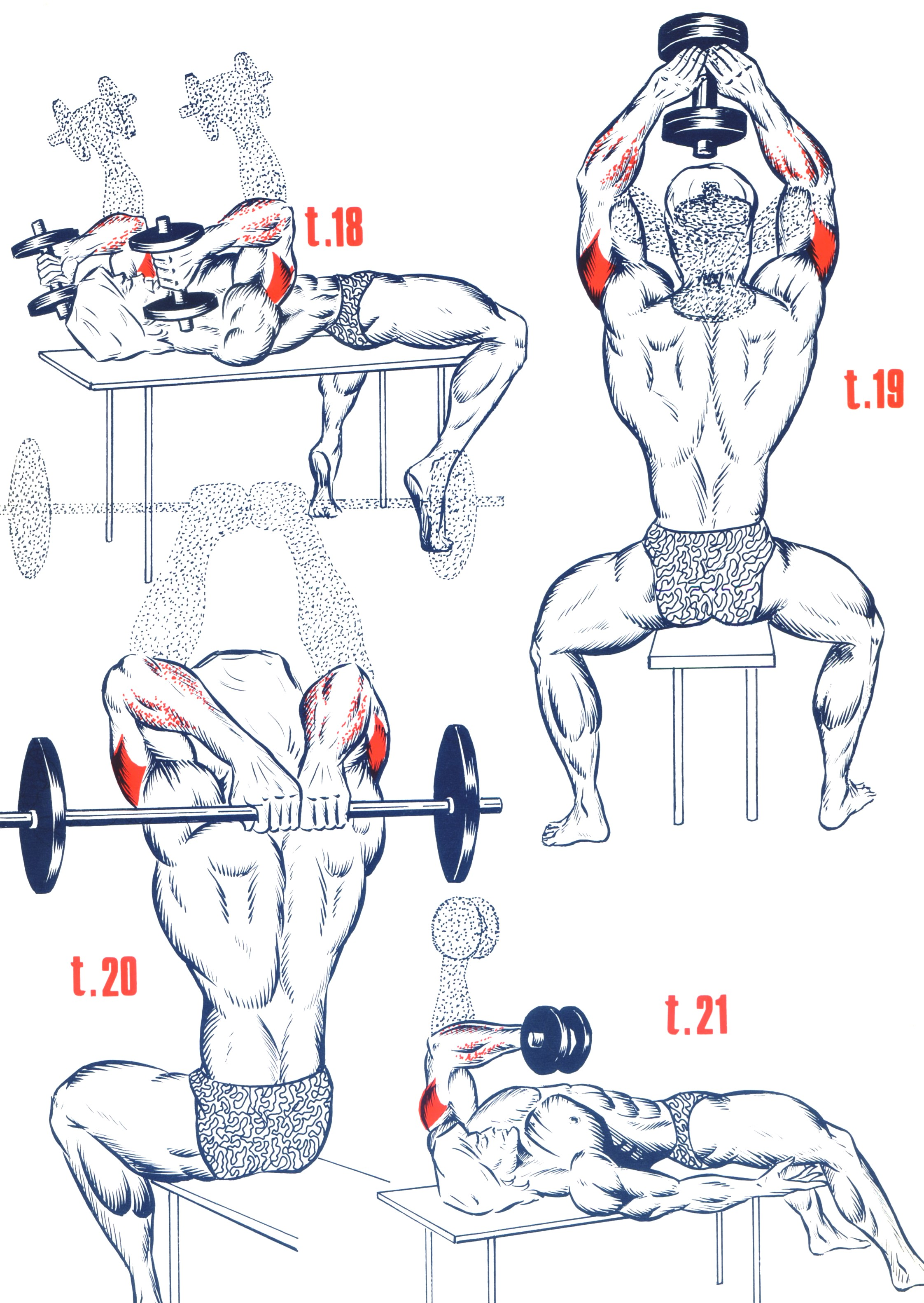 Exercice musculation triceps