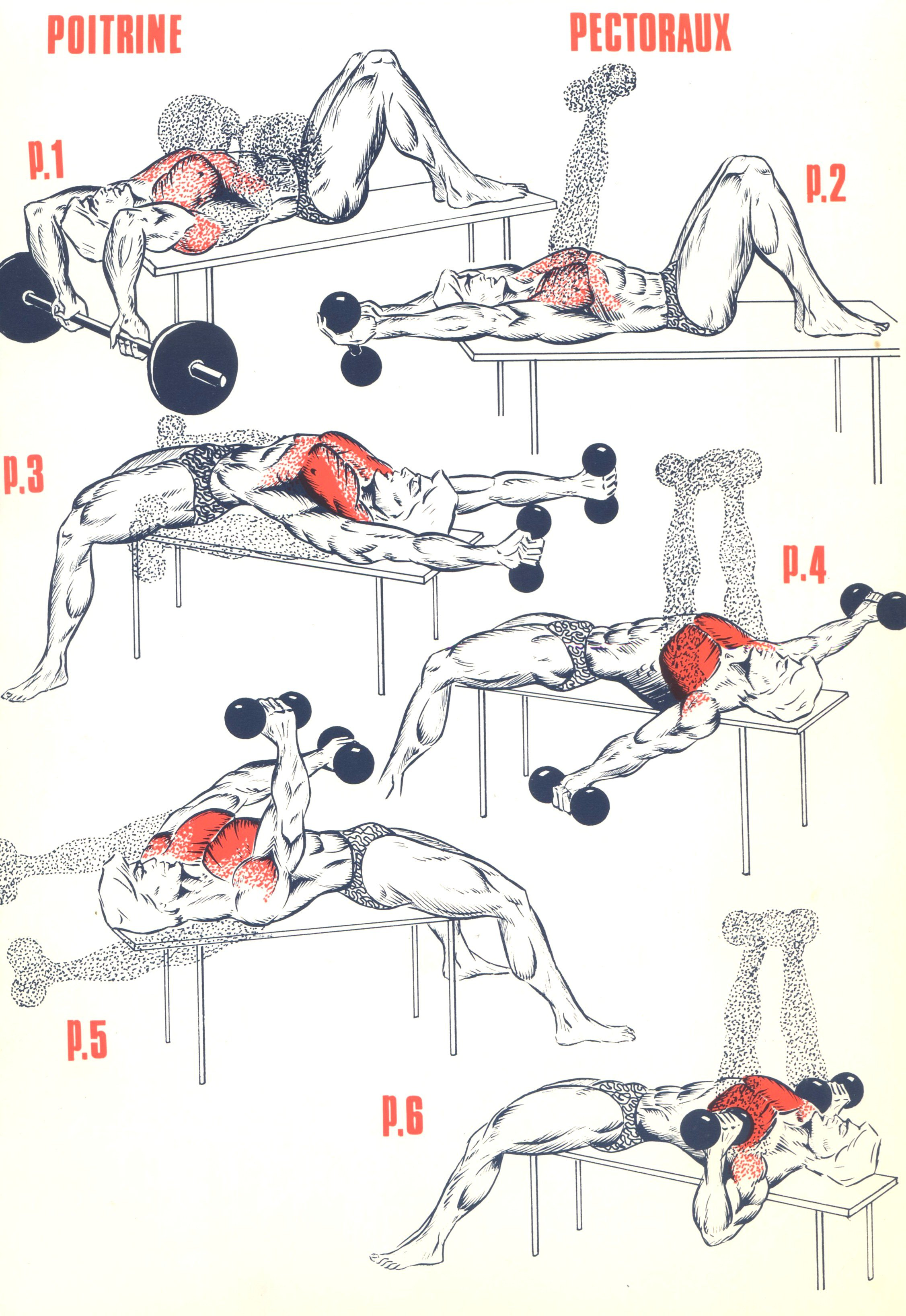 Exercices musculation pectoraux