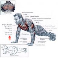 Exercices musculation sans matériel