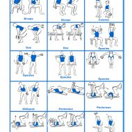 Exercices musculations