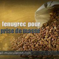 Fenugrec musculation