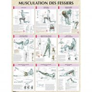 Fessiers musculation