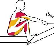 Le rameur muscle quoi