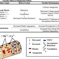 Magnesium muscle