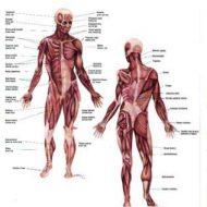 Maladie du muscle