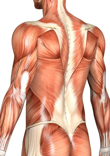 massage muscle