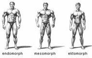 Morphologie musculation