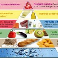 Muscle alimentation