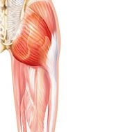 Muscle fesse