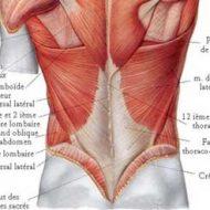 Muscle lombaire douleur