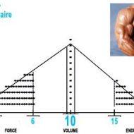 Muscle masse
