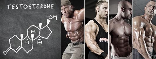 muscle testosterone