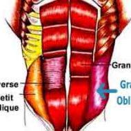 Muscler abdominaux obliques