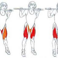 Muscler adducteurs