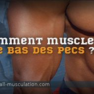 Muscler bas pectoraux