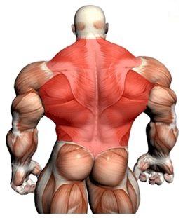 muscler dos
