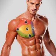 Muscler haut pectoraux