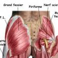 Muscler le bassin