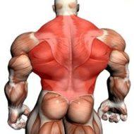 Muscler le dos