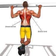 Muscler les dorsaux