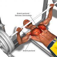 Muscler les pectoraux a la maison