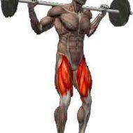 Muscler les quadriceps