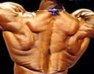 Muscler les trapezes