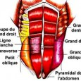 Muscler sangle abdominale