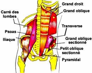 muscles abdos